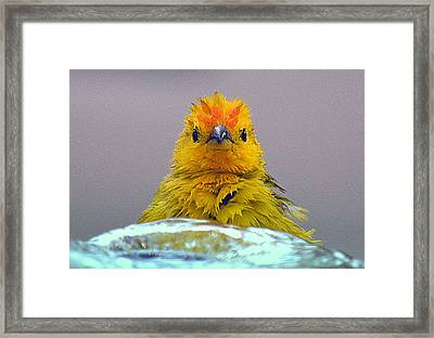 Bath Time Finch Framed Print