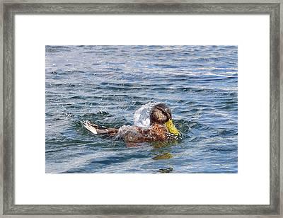 Framed Print featuring the photograph Bath Time by Glenn Gordon