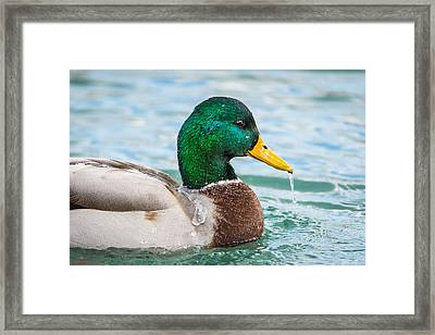 Framed Print featuring the photograph Bath Time by Steven Santamour