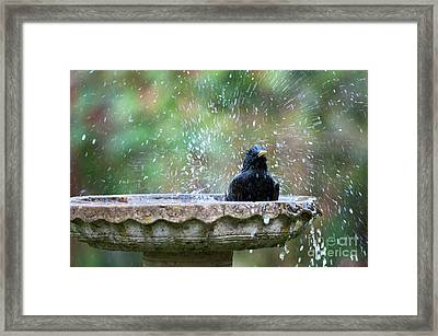 Framed Print featuring the photograph Bath Time by Tim Gainey