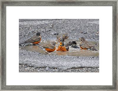 Bath Time Framed Print by Todd Hostetter