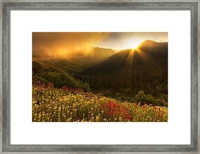 Bathed In Light Framed Print by Mark Kiver