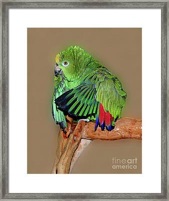 Bathing Beauty Amazon Framed Print