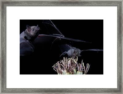 Bats At Work Framed Print by E Mac MacKay