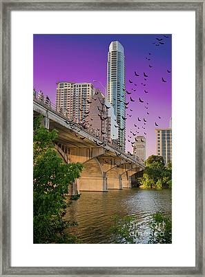 Bats Over Austin Framed Print