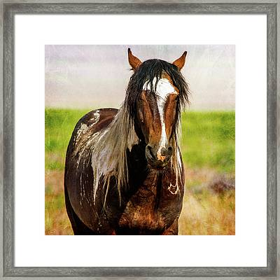Framed Print featuring the photograph Battle Worn Stallion by Mary Hone