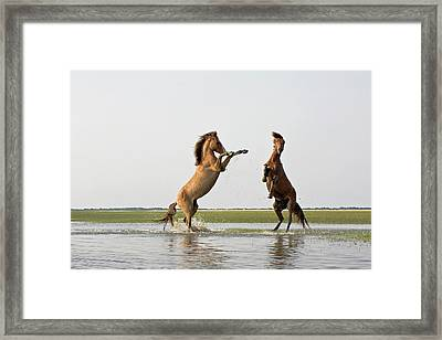 Battling Mustangs Framed Print by Bob Decker