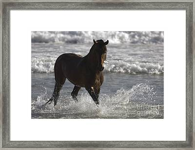 Bay Andalusian Stallion In The Surf Framed Print by Carol Walker