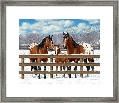 Bay Appaloosa Horses In Snow Framed Print by Crista Forest