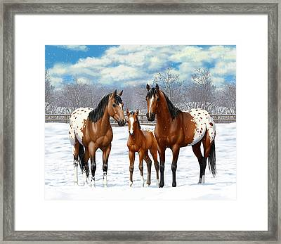 Bay Appaloosa Horses In Winter Pasture Framed Print by Crista Forest