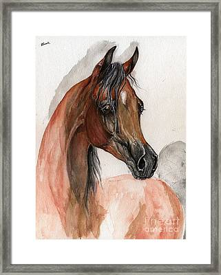 Bay Arabian Horse Watercolor Portrait Framed Print by Angel  Tarantella