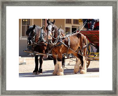 Bay Colored Clydesdale Horses Framed Print