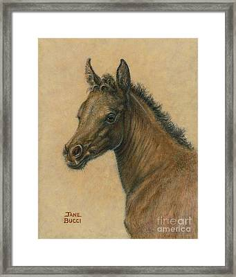 Framed Print featuring the painting Bay Colt by Jane Bucci