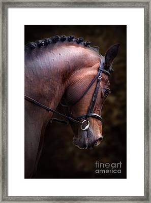 Bay Horse Head Framed Print