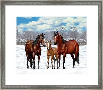 Bay Horses In Winter Pasture Framed Print by Crista Forest