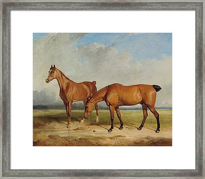 Bay Hunter And Chestnut Mare In A Field Framed Print