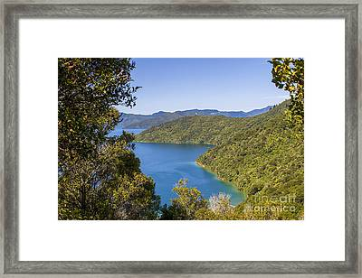 Bay In New Zealand Framed Print by Patricia Hofmeester