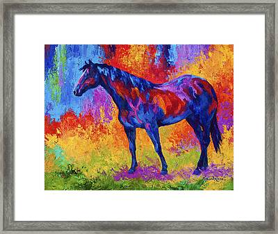 Bay Mare II Framed Print by Marion Rose