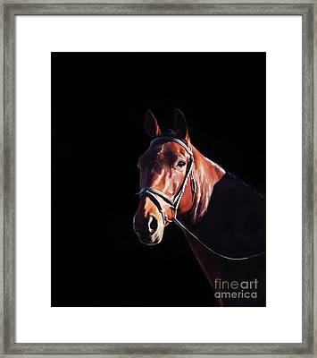 Bay On Black - Horse Art By Michelle Wrighton Framed Print by Michelle Wrighton