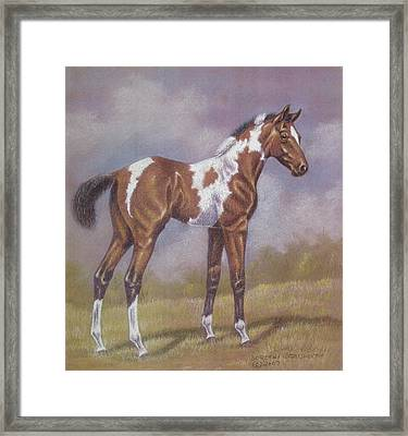 Bay Paint Foal Framed Print by Dorothy Coatsworth