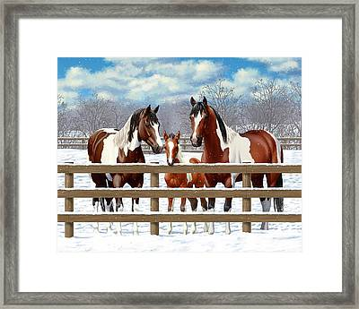Bay Paint Horses In Snow Framed Print