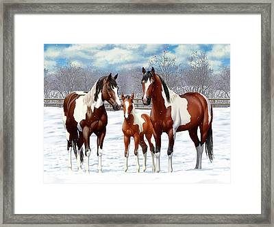 Bay Paint Horses In Winter Framed Print by Crista Forest