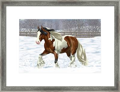 Bay Pinto Gypsy Vanner In Snow Framed Print by Crista Forest