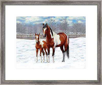 Bay Pinto Mare And Foal In Snow Framed Print by Crista Forest