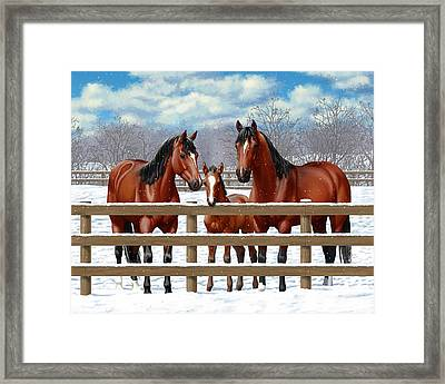 Bay Quarter Horses In Snow Framed Print by Crista Forest