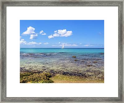 Bayahibe Coral Reef Framed Print