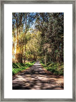 Bayhill Road Bodega Bay Sonoma County Framed Print by Blake Webster