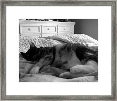 Baylee Framed Print by Lindsey Orlando