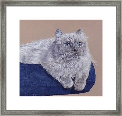 Bayou - Portrait Of A Himalayan Framed Print