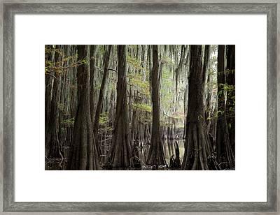Bayou Trees Framed Print