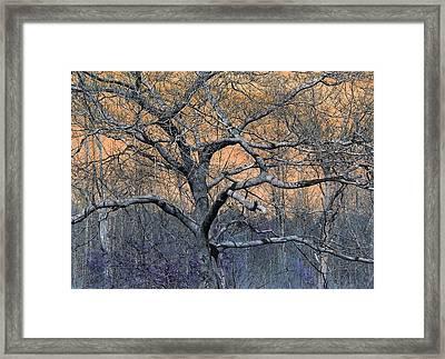 Bb's Tree 2 Framed Print