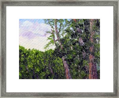 Bc 16 Framed Print by Stan Hamilton