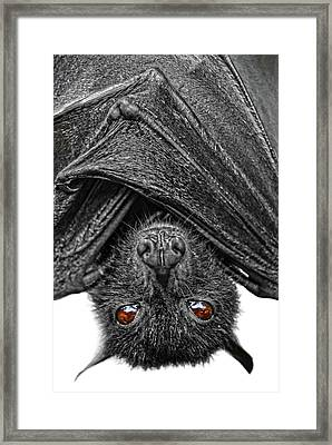 Be Afraid  Framed Print