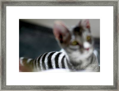 Be Careful What You Focus On  Framed Print