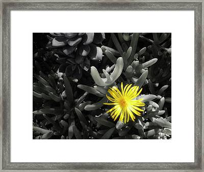 Be Different Framed Print