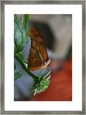 Framed Print featuring the photograph Be Happy by Cathy Harper