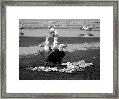 Be Hungry ...  Framed Print by Juergen Weiss