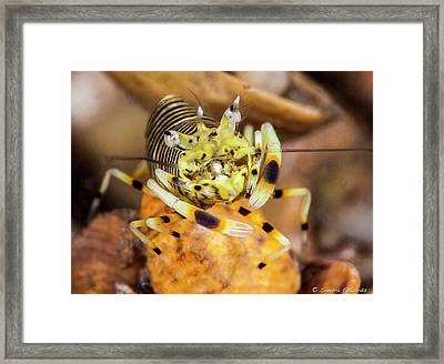 Be My Bumble Bee Framed Print by Sandra Edwards