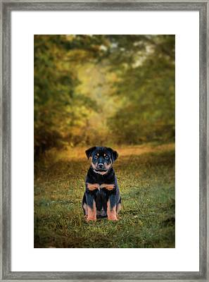 Be My Friend Puppy Dog Art Framed Print by Jai Johnson