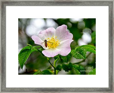 Be My Guests. Framed Print