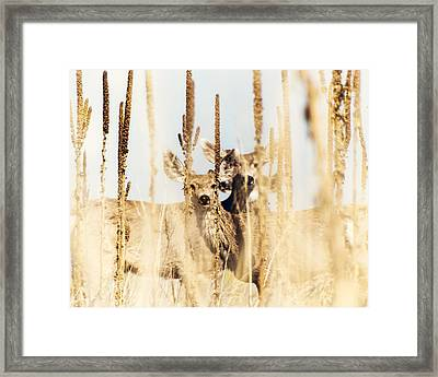 Be Still Framed Print by Humboldt Street