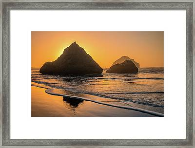 Framed Print featuring the photograph Be Your Own Bird by Darren White