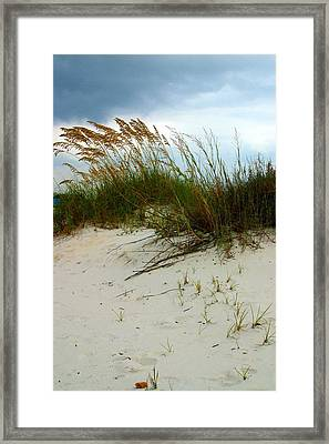 Beach   Grass   And  Sky Framed Print