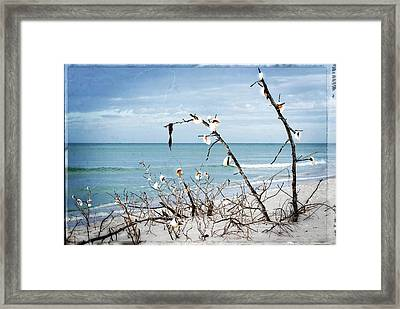 Beach Art - Sea Shrine - Sharon Cummings Framed Print