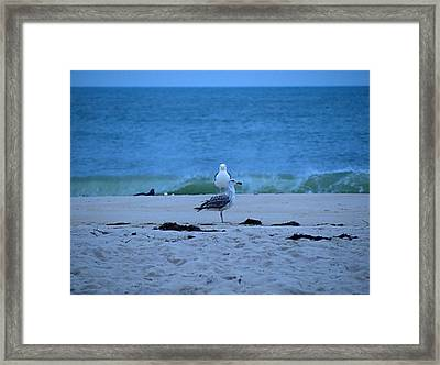 Framed Print featuring the photograph Beach Birds by  Newwwman