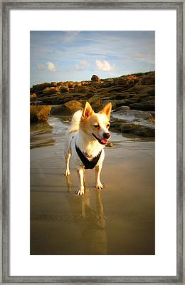 Beach Boy 2 Framed Print by Mandy Shupp